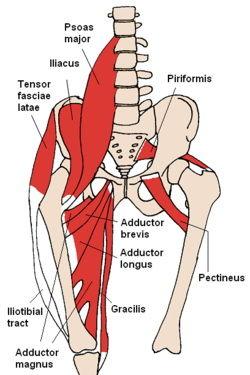 عضله Iliopsoas