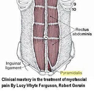 عضله Pyramidalis